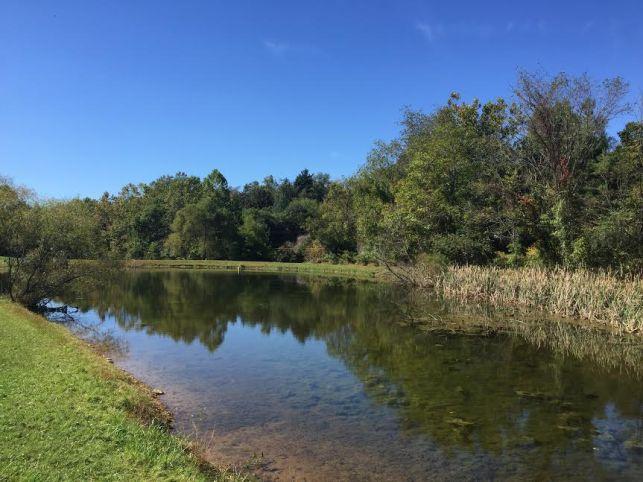 One of the two ponds on the Singleton-Mathews farm. Photo credit: Elizabeth Mann