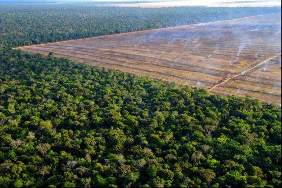 Recently Cleared Jungle, Matto Grasso, Brazil.Recently Cleared Jungle, Matto Grasso, Brazil.Carlos Perez