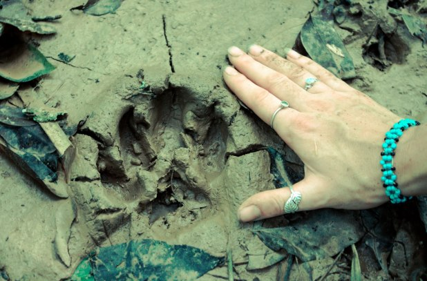 Jaguar Print at ARCC (Lucys hand).Scullion